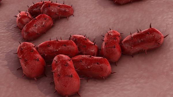 bacterial meningitis 3d model