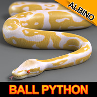 Ball Python (Albino)