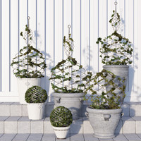 Pottery Barn/Live Ivy Spiral Topiary
