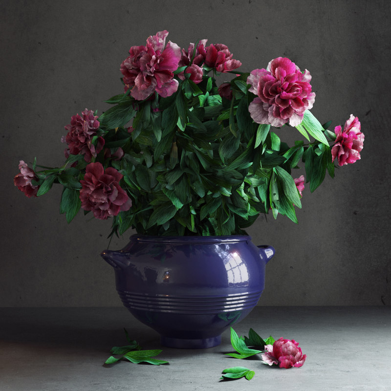 3d potted peonies model