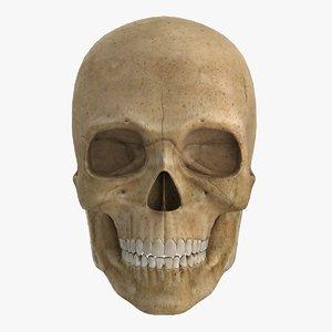 low-poly human skull 3d model