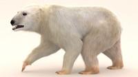 Polar Bear (fur) rigged