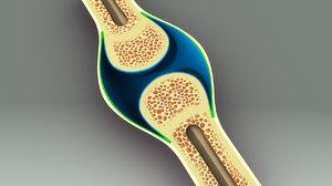 3d bone anatomy model