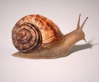 snail rig 3d max