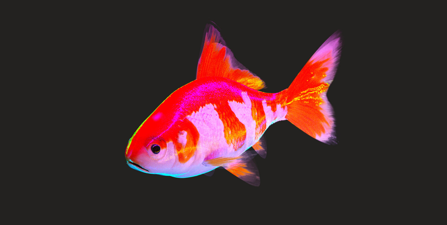 3d model rigged goldfish normal displacement