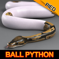 pied ball python 3d model