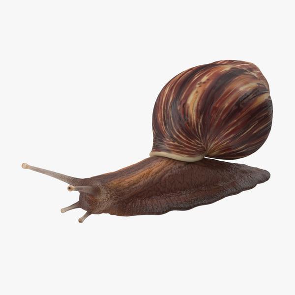 snail grove 3d c4d