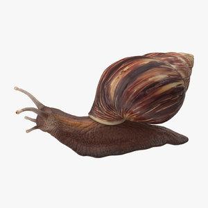 3d snail 03 model
