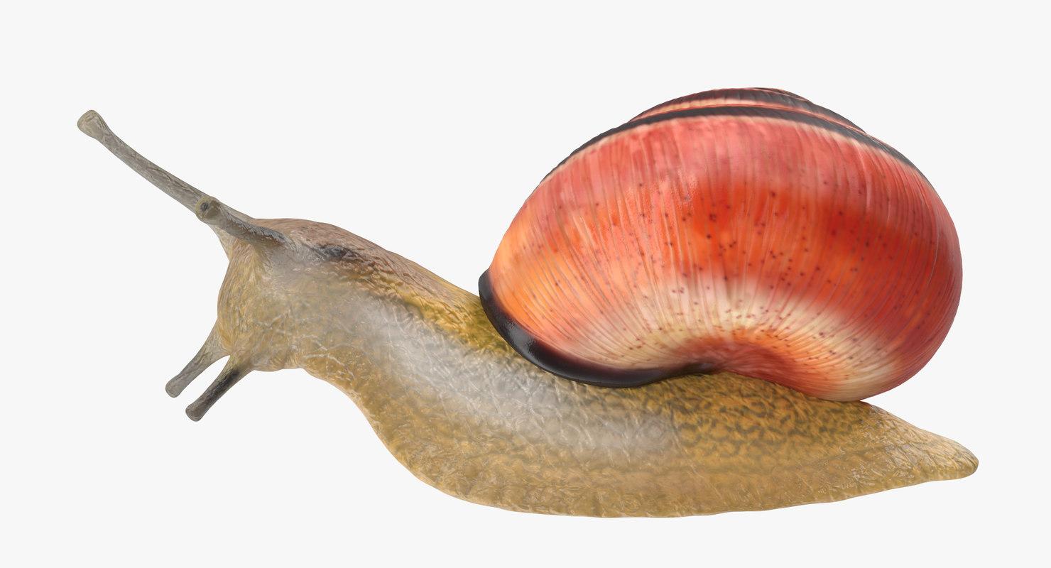 3d land snail 02