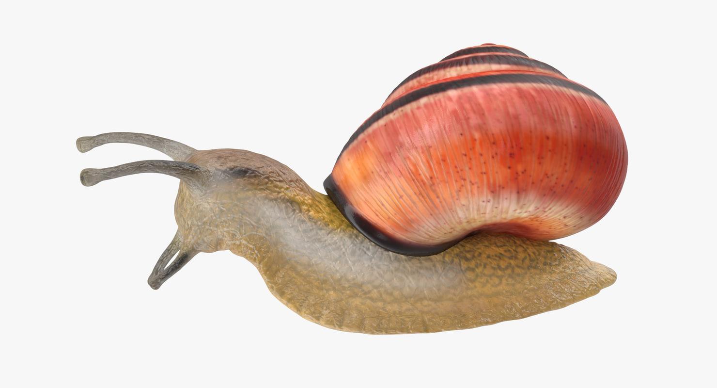 land snail 03 3d max