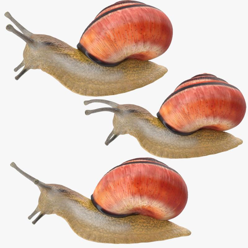 max land snail poses