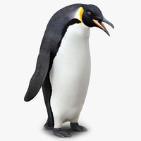 Emperor Penguin Pose 3