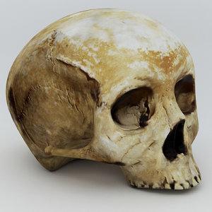 skull skul 3d model