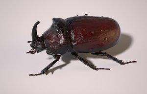 rhinoceros beetle rig max
