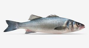 bass seabass sea 3d model