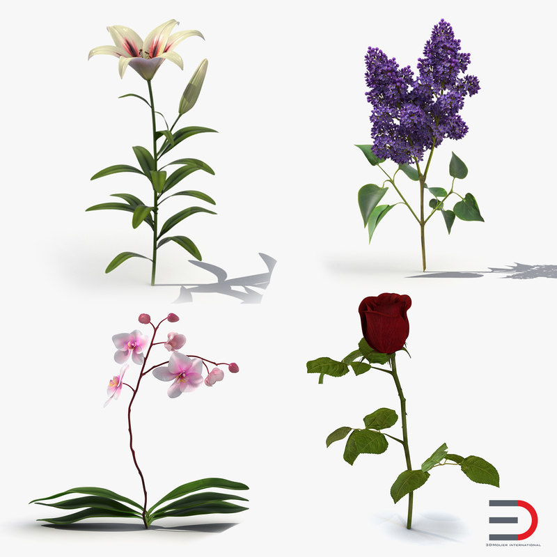flowers 2 orchid lilac 3ds