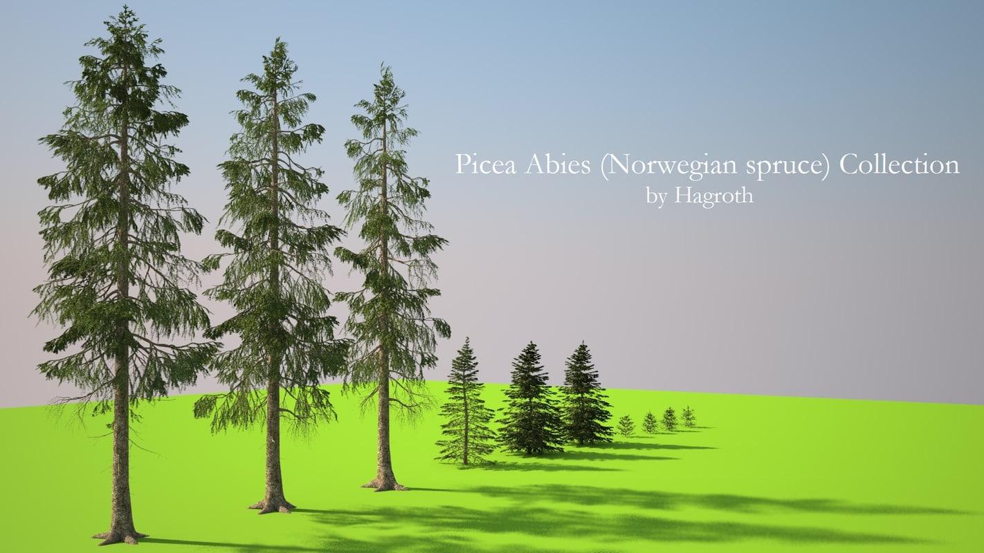 obj picea abies norwegian spruce