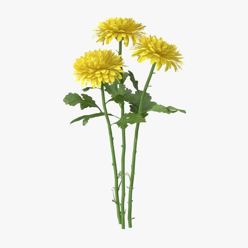 yellow chrysanthemum 3d model