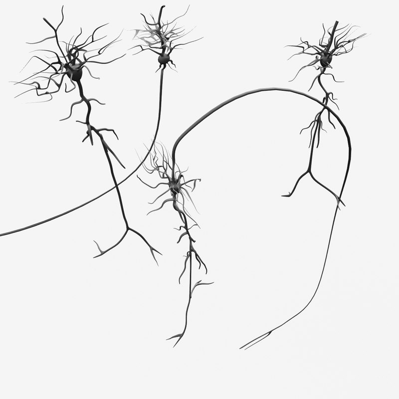 lwo neurons nerve cells