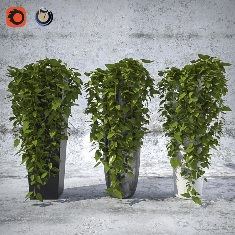 max plant pots