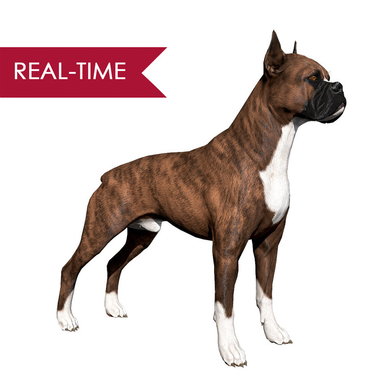 boxer dog real-time real time 3ds
