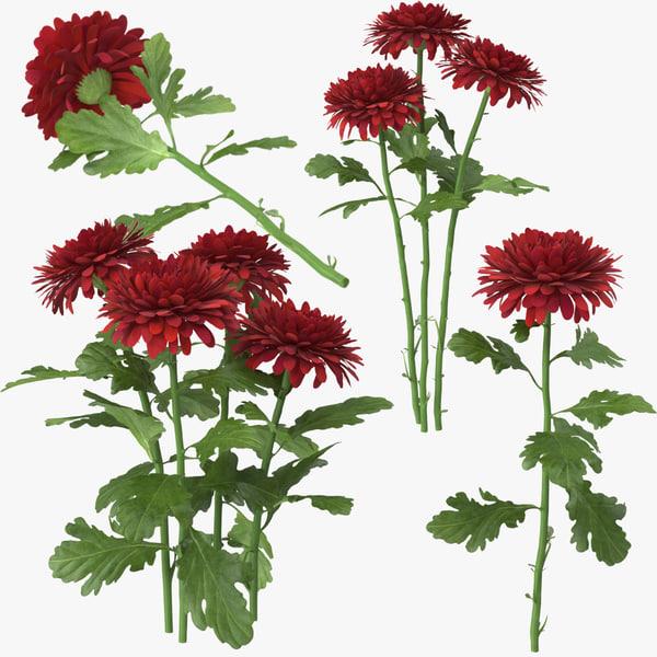 c4d red chrysanthemum
