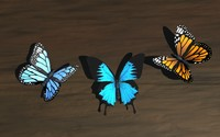 c4d butterfly wings