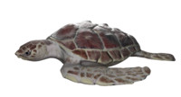 loggerhead sea turtle 3d model