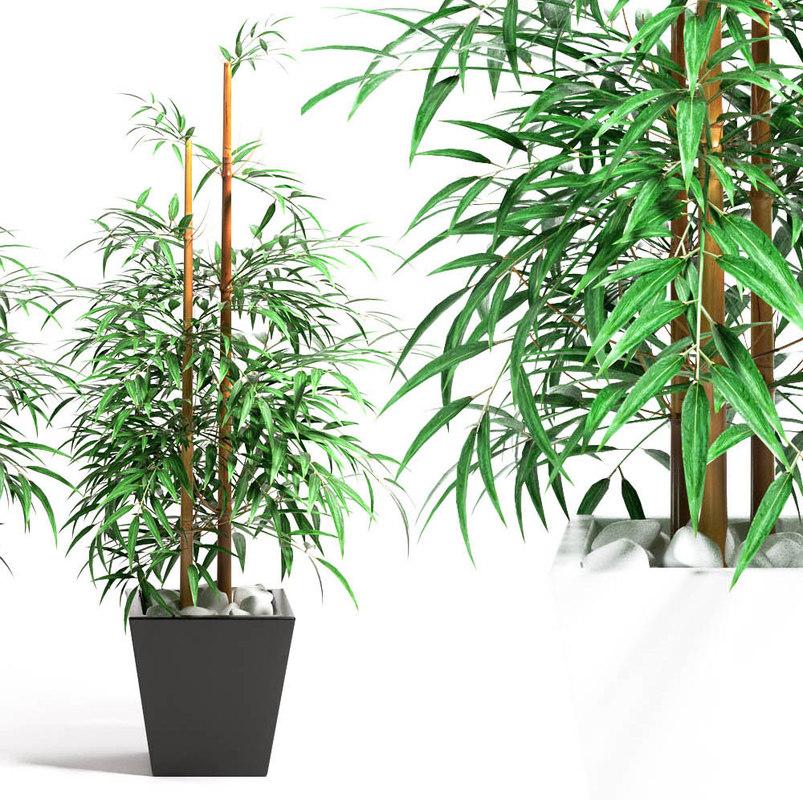 bamboo plant 4 max