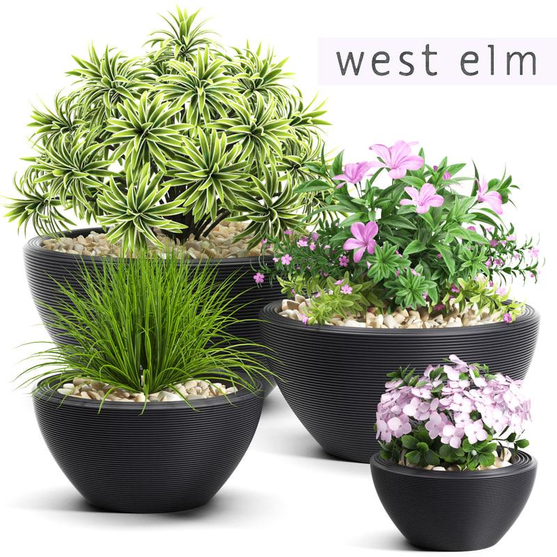 plants 54 flowered 3d max