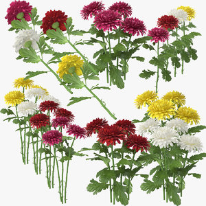 chrysanthemum obj
