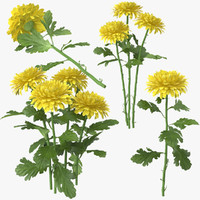 yellow chrysanthemum 3d model