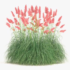 3d model cortaderia pampas grass plant