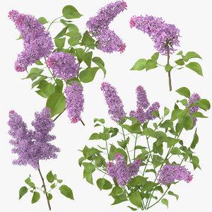 max hibiscus lilac