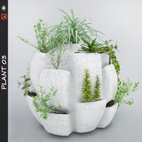 Plant 3(1)