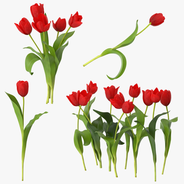 3d model red tulips