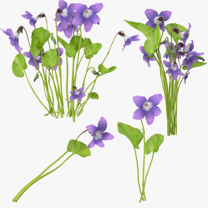 violets 3d max
