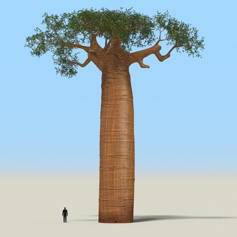 taobab tree leaves 3d model