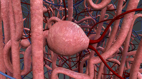 nephron 3d model