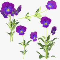 3d pansies model