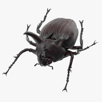 rhinoceros beetle pose 01 3d model