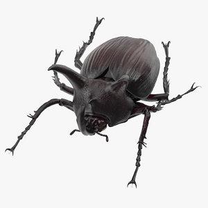 rhinoceros beetle pose 01 3d model