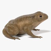 toad bufo 3d model