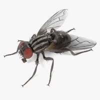 House fly 3d models for download turbosquid for Disposizione domestica 3d