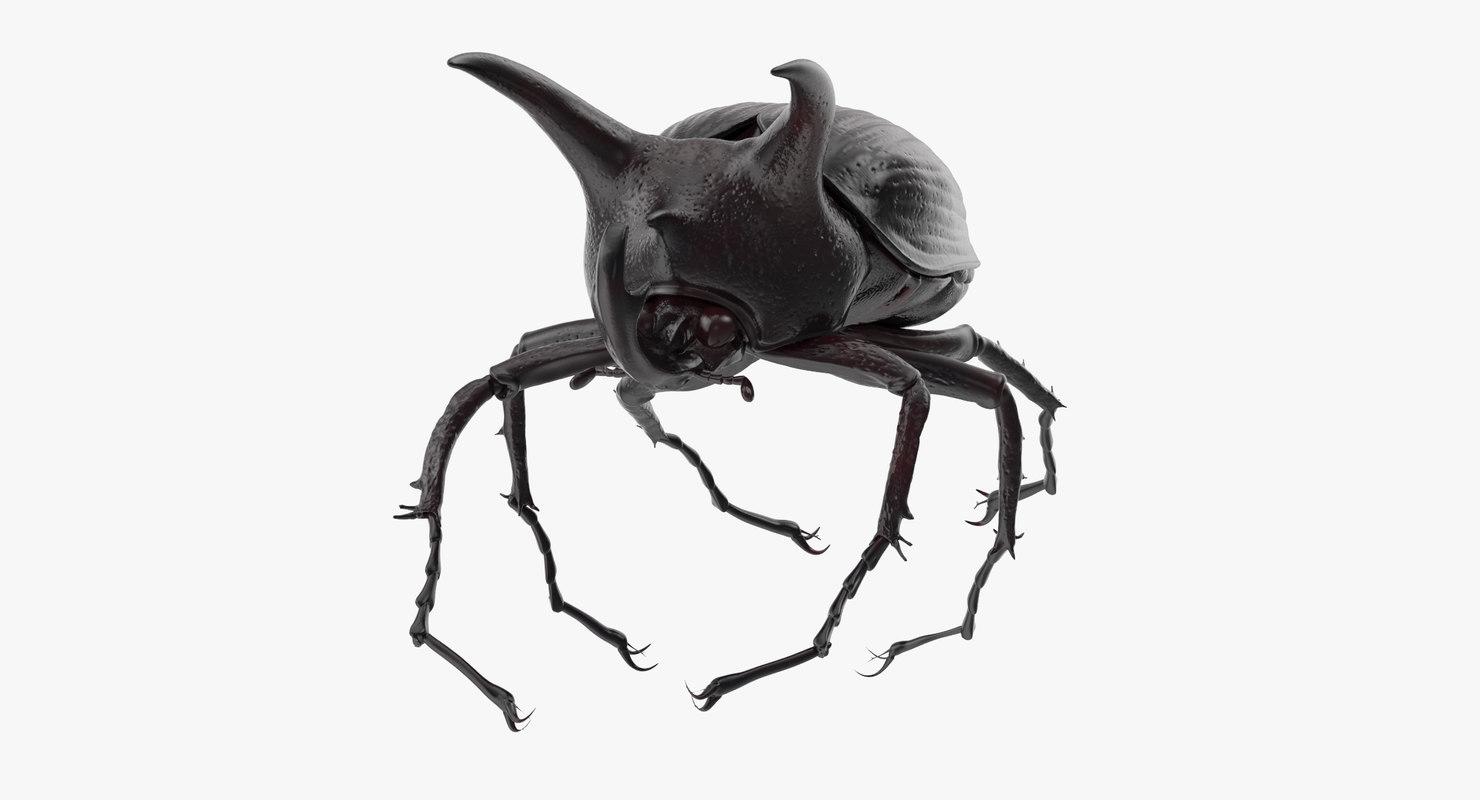 rhinoceros beetle pose 03 3d model