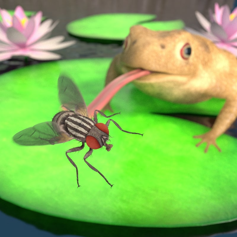 toad catching fly 3d 3ds