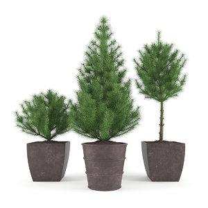 3d max pine - set 1