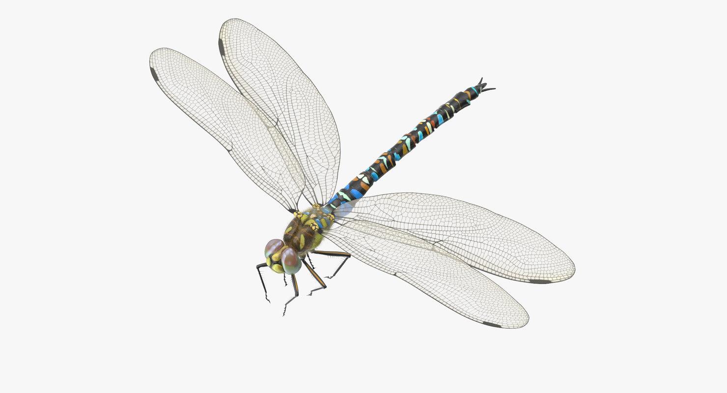 3d model dragonfly pose 01