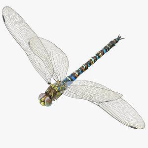 3d model dragonfly pose 02