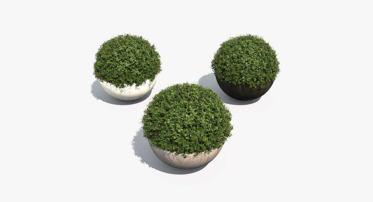3d boxwood shrubs bubble pots